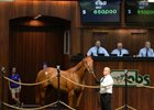Hip 669, a Candy Ride filly, brought $650,000