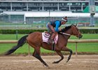 Blamed, winner of five consecutive races, works at Churchill Downs April 25