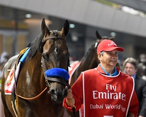 Mubtaahij prior to the 2018 Dubai World Cup at Meydan Racecourse