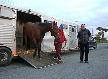 Ocean Township, New Jersey resident and Thoroughbred Trainer Greg Sacco, keeps a careful eye on Draxhall Woods as he is led off the van at the Monmouth Park Stable Area in Oceanport, N.J. on Friday morning April 20, 2018 after arriving from Keeneland Racecourse in Lexington, Kentucky.  Draxhall Woods was the first thoroughbred to arrive as Monmouth Park prepares for the upcoming 73rd season of racing which begins on Saturday May 5, 2018.