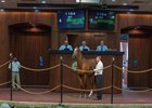 Hip 1164, a Kantharos colt out of Valid Concorde, brings $800,000