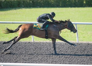 Hip 636, a Shanghai Bobby filly, ran the fastest eighth-mile during the OBS April under tack show
