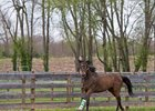 Green Mask stretches his legs in a paddock at Park Equine Hospital near Versailles, Ky.