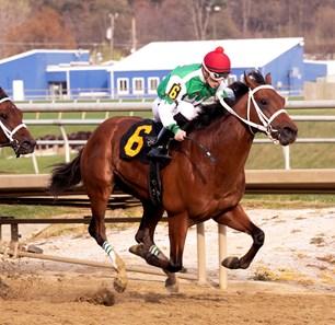 Diamond King Horse Profile Bloodhorse