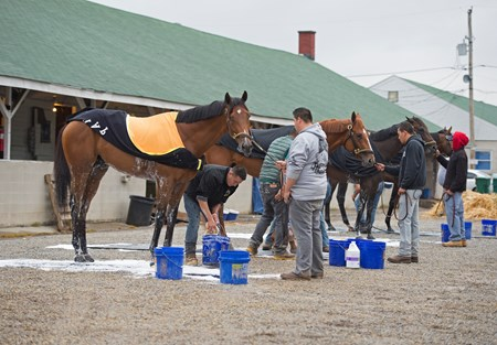 l-r, Audible, Vino Rosso, Noble Indy, Magnum Moon Morning scenes at Churchill Downs on April 25, 2018 Churchill Downs in Louisville, Ky.
