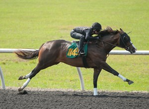A Mineshaft colt consigned as Hip 1149 works a quarter mile in :20 3/5 in preparation for the Ocala Breeders' Sales spring sale