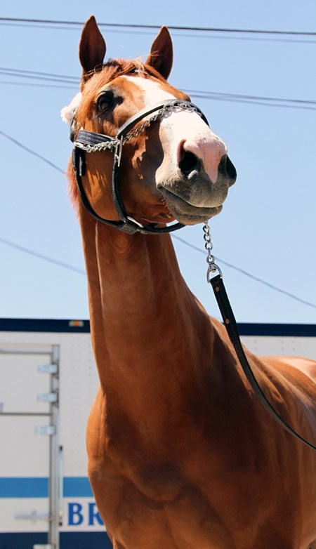 Justify arrives at Churchill Downs on April 30, 2018
