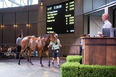 Gypsy Diamond, a three-time stakes-winning mare sold as Lot 67, brought the highest price at the Inglis Chairman sale of breeding prospects