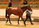 A Scat Daddy colt consigned as Lot 163 brings the top price on the final day of the Tattersalls Craven breeze-up sale