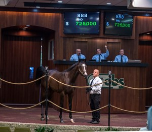 Hip 888, a colt by War Front, brought $725,000