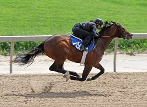 Hip 565 works an eighth-mile in :10 1/5 at the Fasig-Tipton Midlantic sale