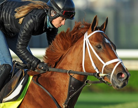 Vino Rosso, Adele Bellinger up, stretches his legs at Churchill Downs Tuesday morning...