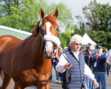 Justify Bright After Preakness Victory Bloodhorse