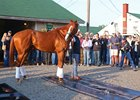 Justify on the backside of Churchill Downs the morning after winning the Kentucky Derby