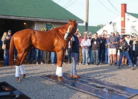 Justify the morning after winning the Kentucky Derby (G1) on May 6, 2018 Churchill Downs in Louisville, Ky.