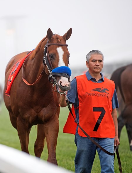 Groom Eduardo Luna (Lalo) in paddock with Justify with Mike Smith wins the Preakness Stakes (G1) at Pimlico during Preakness week on May 19, 2034 Pimlico in Baltimore, Maryland.