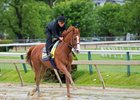 Justify takes his first trip over the track May 17 at Pimlico Race Course