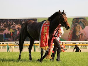 Wagnerian after winning the second leg of the Japanese Triple Crown at Tokyo Racecourse