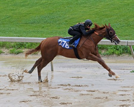 Hip 278, a Mucho Macho Man colt, breezes a quarter-mile in :21 1/5 after rains fell May 16