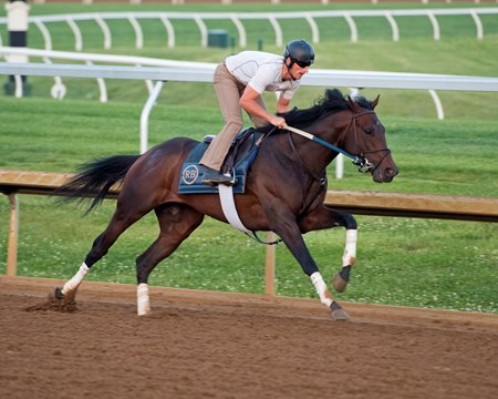 Quip, with trainer Rodolphe Brisset up, works May 13 at Keeneland