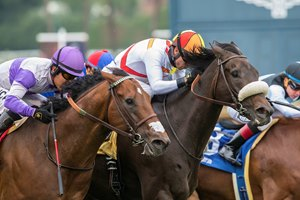 Soi Phet (white shadow roll) wins the Crystal Water Stakes at Santa Anita