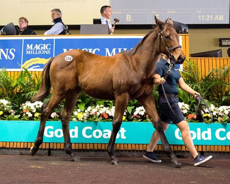 Lot 334 sold for AU$750,000 during the second session of the Magic Millions Gold Coast National Weanling sale