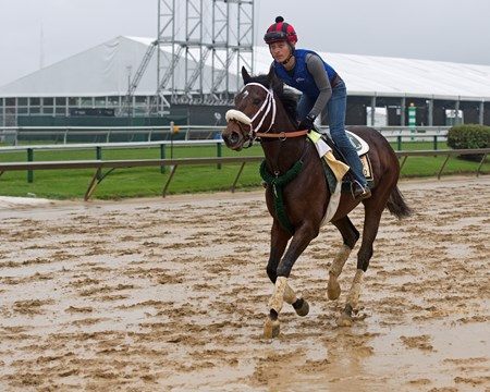 Bravazo Morning scenes at Pimlico during Preakness week on May 16, 2034 WinStar in Versailles, Ky.