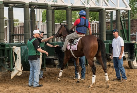 KY Oaks entrant Coach Rocks schools at the starting gate at Churchill Downs Wednesday May 2, 2018