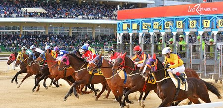 SIS Plans Live Coverage of Korean Racing - BloodHorse