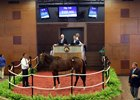 A Maclean's Music colt brings $300,000 from agent Steve Young at the Fasig-Tipton Midlantic sale