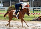 Good Magic gallops May 15 at Pimlico Race Course