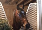 Sporting Chance in his stall at Churchill Downs