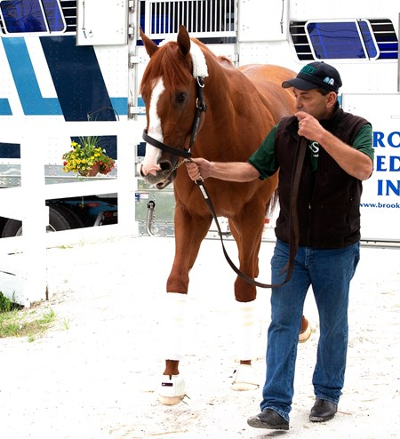 Justify arrives at Pimlico, May 16, 2018