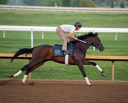 Quip with trainer Rodolphe Brisset up works on May 13, 2018