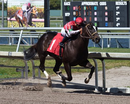 Saint Michael pulls away to a two-length score in a Gulfstream Park maiden claiming event