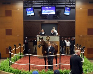 Hip 565, 2018 Fasig-Tipton Midlantic 2 Y-O-in Training Sale