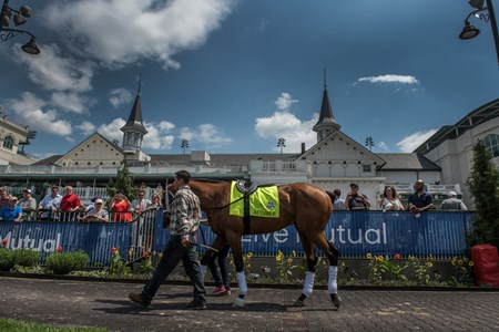 KY Derby entrant Audible schools in paddock Wednesday May 2, 2018