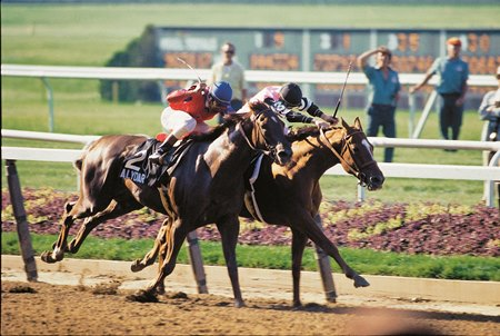 Affirmed winning the 1978 Belmont Stakes.