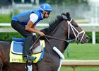 Sheikh Mohammed's Godolphin is represented by Enticed in the Kentucky Derby