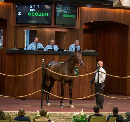 A colt from the last crop of Scat Daddy brings the highest price during the first session of the OBS June 2-year-olds in training sale in Ocala, Fla.