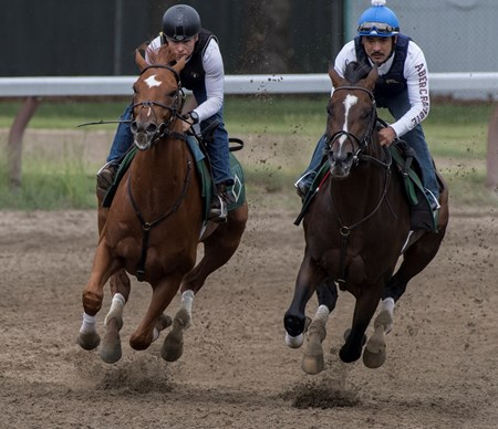 Hofburg with exercise rider Neil Poznansky aboard, left, gets his final tune up work in tandem with Good Samaritan with exercise rider Juan Quintero for the 150th Belmont Stakes June 1, 2018 at the Oklahoma Training Center in Saratoga Springs, N.Y.