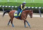 Hoppertunity gallops under Dana Barnes June 7 at Belmont Park