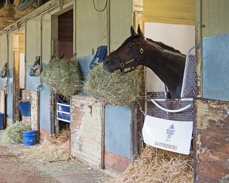 Gronkowski in his stall at Belmont Park the morning after placing second in the Belmont Stakes