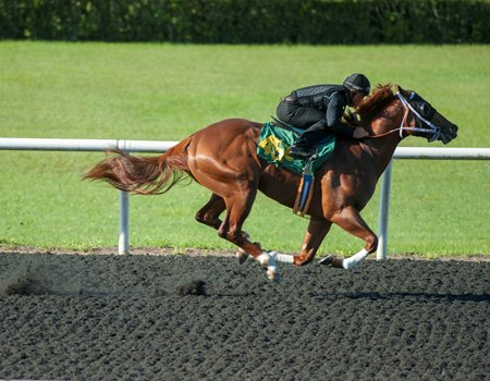 A New Year's Day colt consigned as Hip 455 breezes a quarter-mile in :20 3/5 at the under tack workouts in Ocala, Fla.