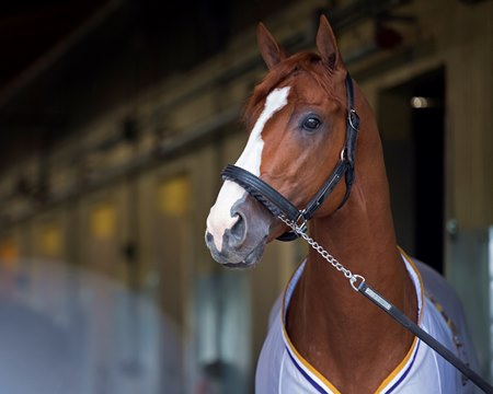 Justify Still Taking It Easy At Santa Anita Bloodhorse