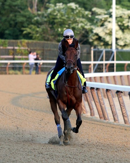 Abel Tasman on the track at Belmont Park on June 8, 2018