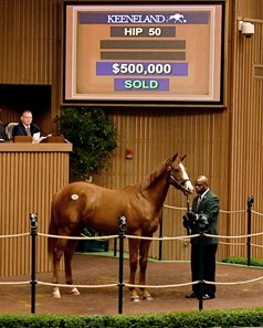Justify sells as Hip 50 during the 2016 Keeneland September yearling sale