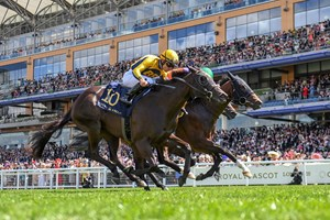 Shang Shang Shang (yellow silks) wins the Norfolk Stakes June 21 at Royal Ascot