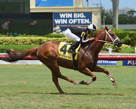 Pay Any Price wins 2018 Crystal River Stakes at Gulfstream Park.