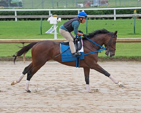 Tenfold Morning training at  June 1, 2018 Churchill Downs in Louisville, Kentucky.